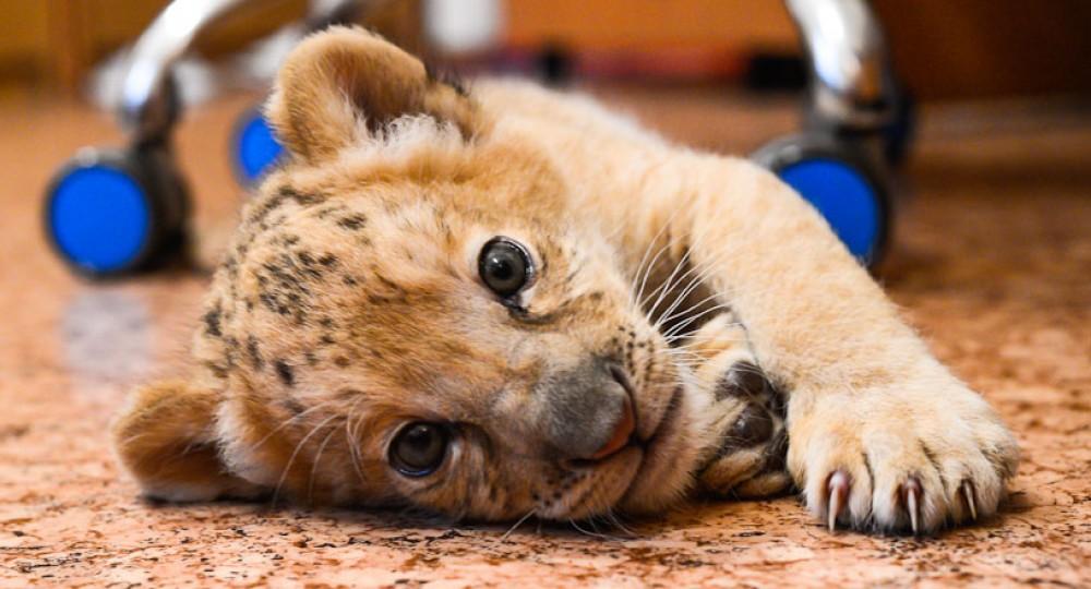 фото Котёнок недели слайд 1