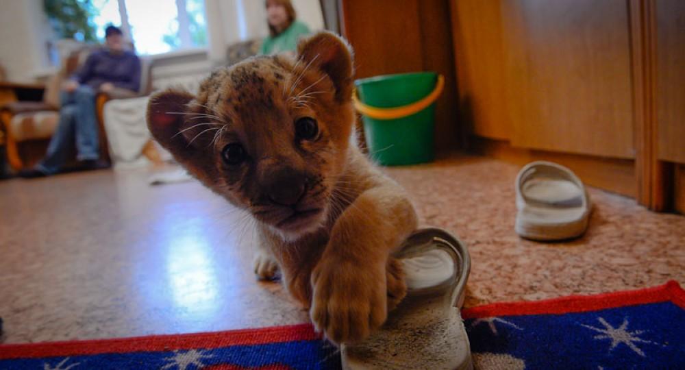 фото Котёнок недели слайд 4